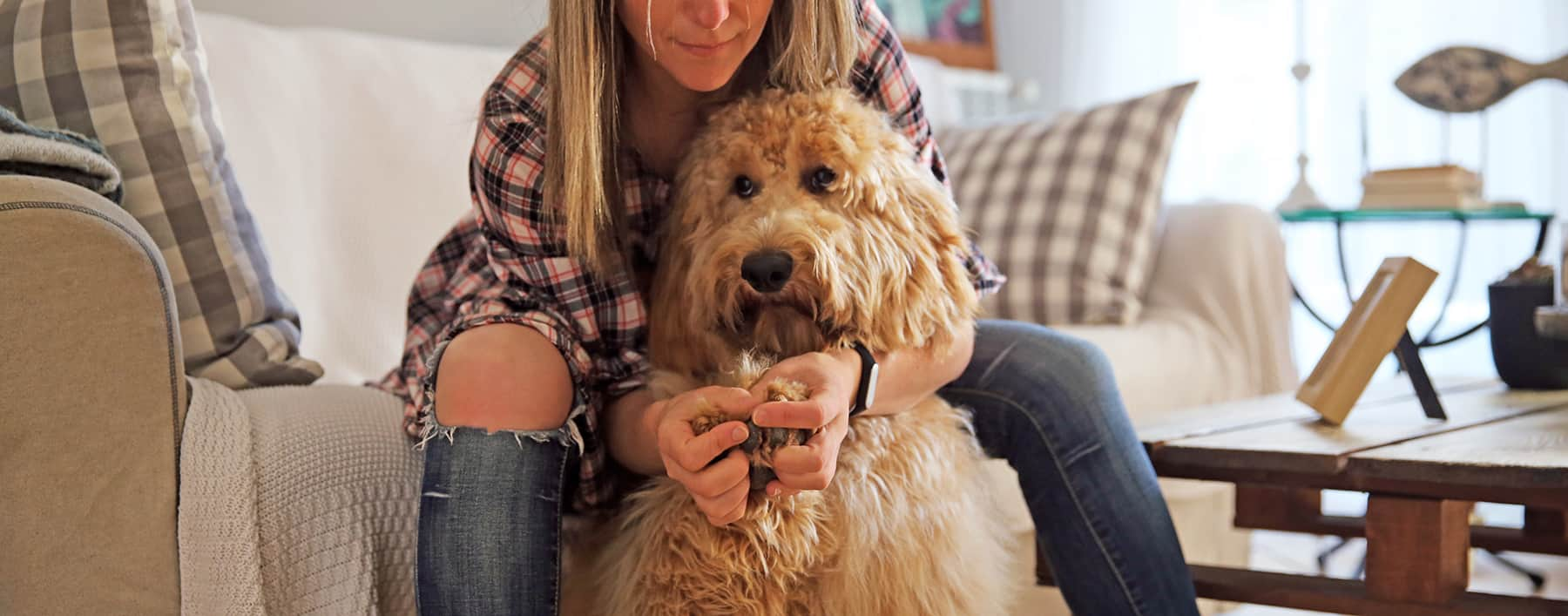 Learn how to identify if your Australian Cobberdog Labradoodle is completely healthy