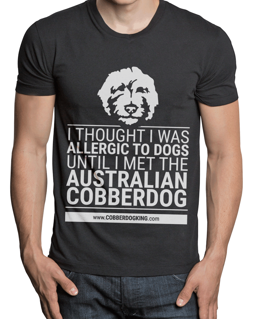 The Australian Cobberdog is a hypoallergenic dog. It has hair that doesn't shed or produce dandruff and so it doesn't dirty the house or produce allergy