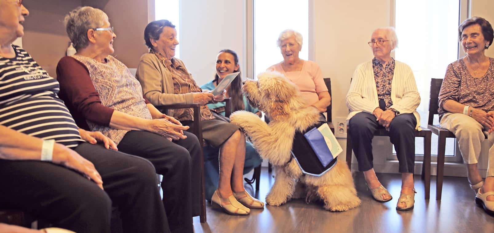 An ideal temperament to be a family dog and to become a therapy or assistance dog. Balanced, gentle, friendly, enthusiastic and empathetic