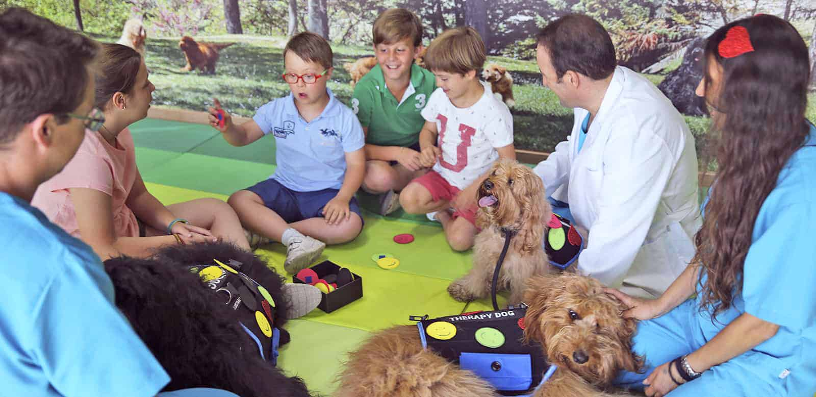No other breed has better qualities than the Australian Cobberdogs to be an exemplary therapy or assistance dog