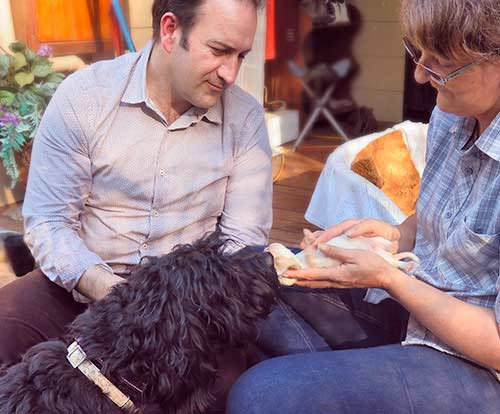 We interviewed Wally Conron, the creator of the Labradoodle and investigated how his work continued until achieving the Australian Cobberdog
