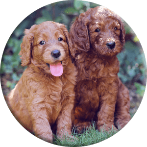 dog puppies in nature round picture