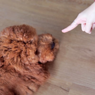 hand pointing angrily at a dog
